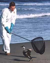Netting a bird at the ocean